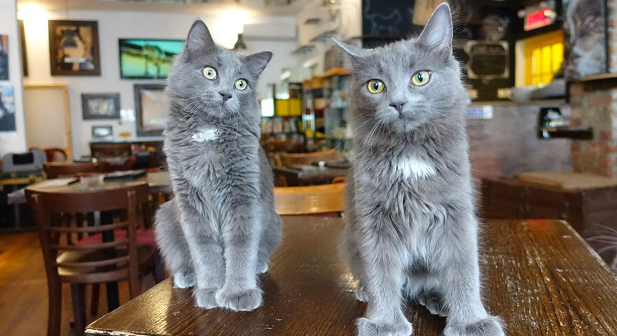 chat-lheureux-montreal-insolite-montreal-citycrunch
