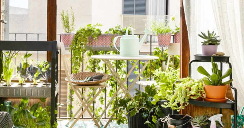 balcon-potager-balcon-blogue-montreal-city-crunch