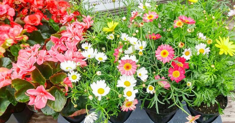 fleur-et-soins-fleur-montreal-bon-plan-potager-balcon-blogue-montreal-city-crunch