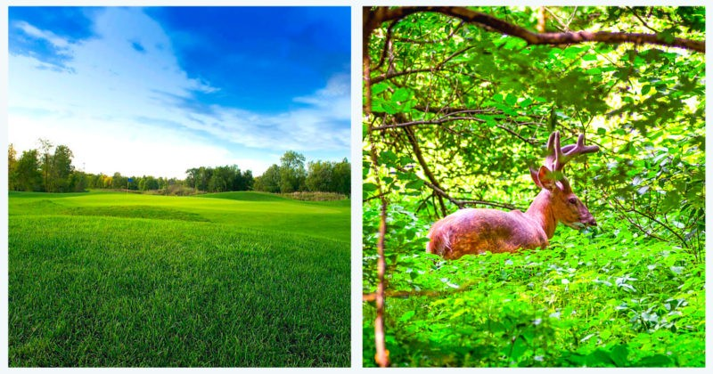 golf-metropolitain-anjou-montreal-blogue-montreal-citycrunch