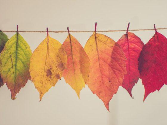 8_bonnes_raisons_de_se_réjouir_de_l_arrivée_de_l_automne